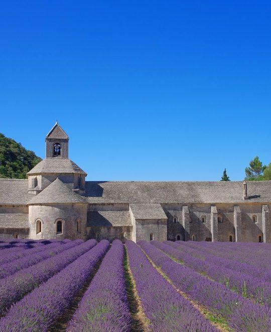 MiniVan Lavender Tour