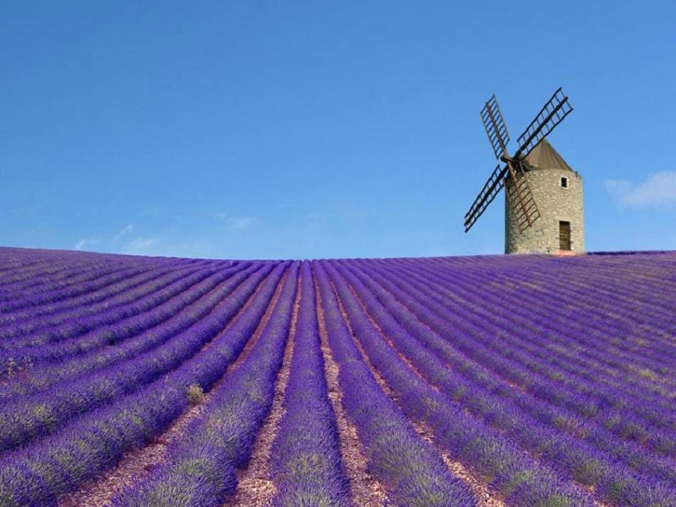Shore Excursions Lavender tour