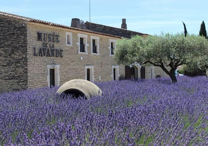 Provence Shore Excursions Lavender Marseille