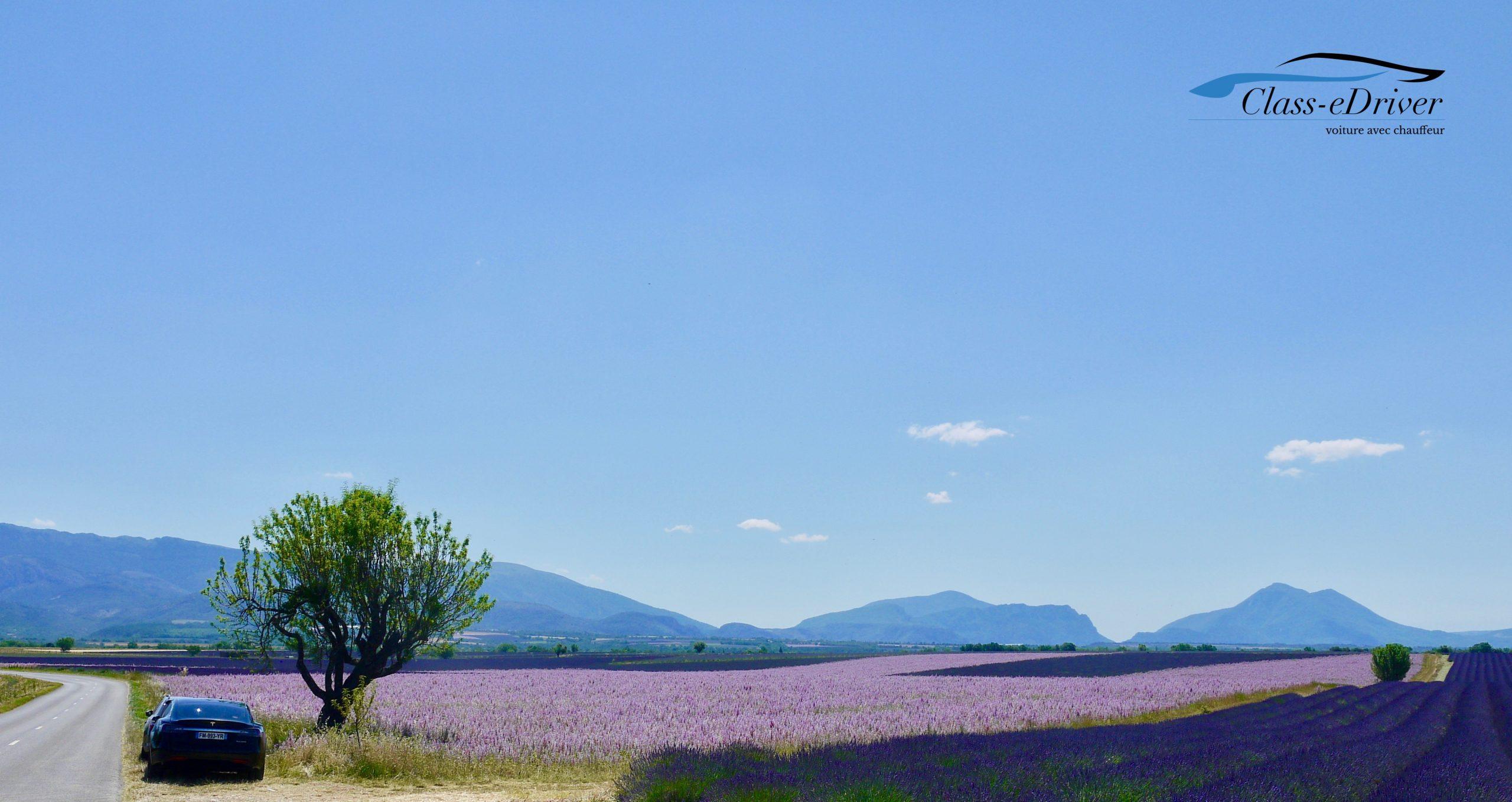Lavender Fields Private Tour