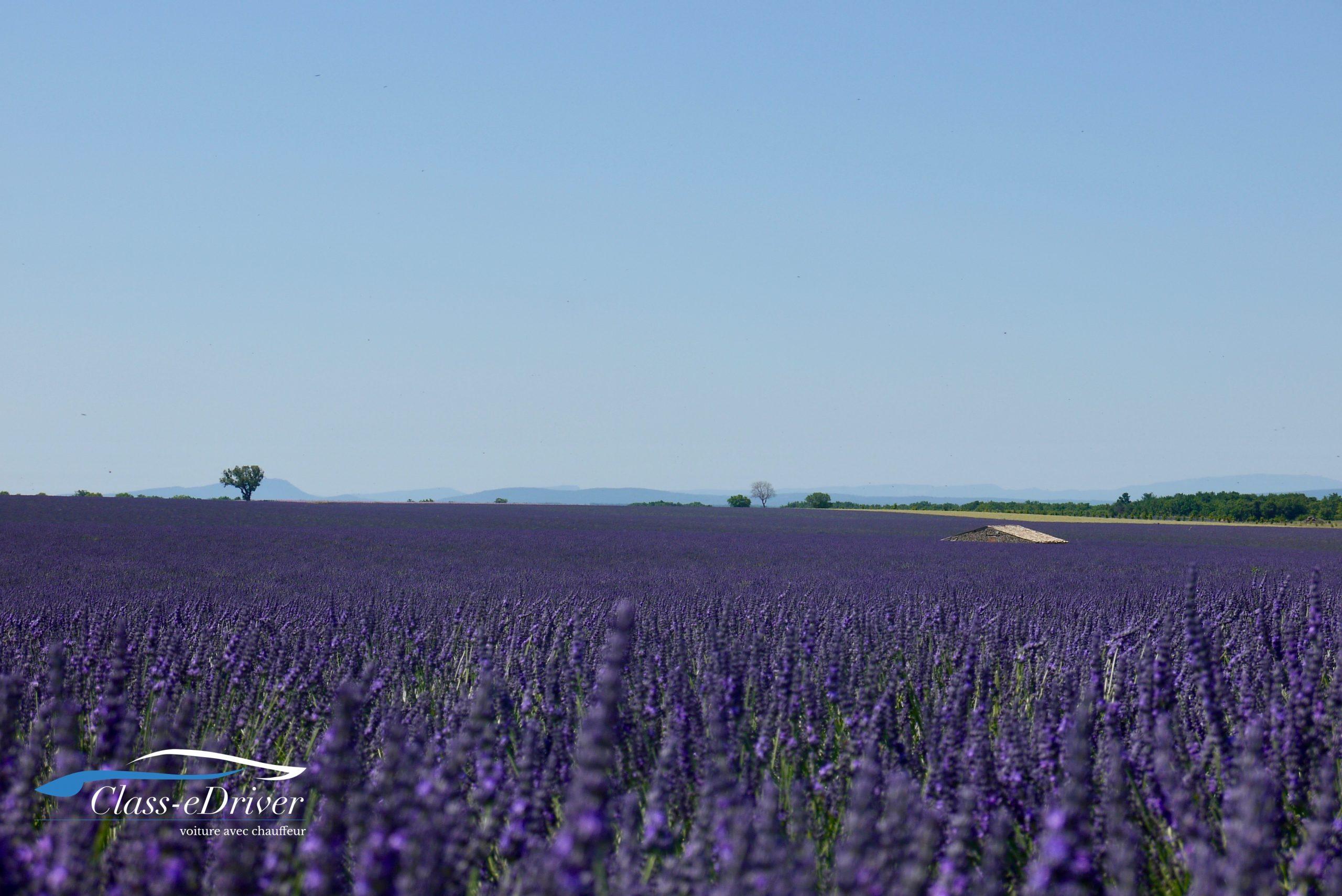 Lavender Tour Valensole